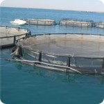 development_aquaculture